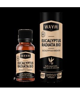 Organic Eucalyptus Radiata...