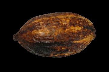 Fruit du cacao